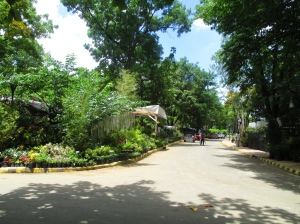 plant nurseries
