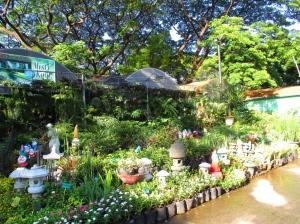 plant nursery 7
