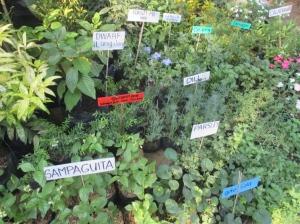 plant nursery herbs