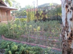 urban farming 3