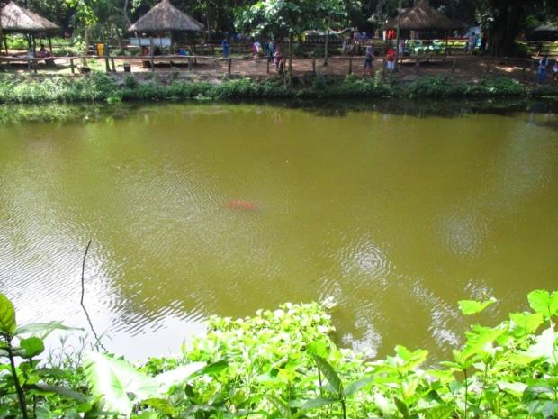 fishing lagoon 2
