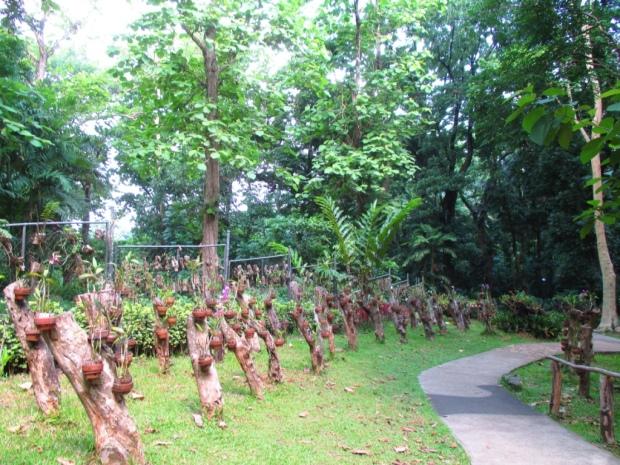 orchidarium 1