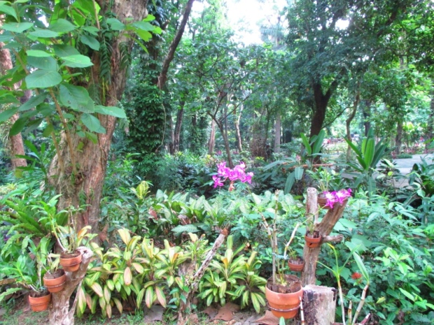 orchidarium 2