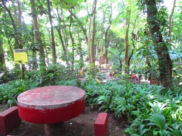picnic 5