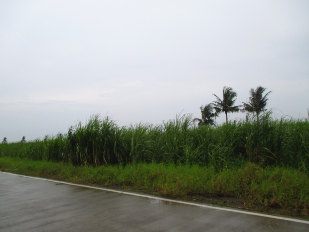 Road going to The Ruins, Talisay, Negros Occidental